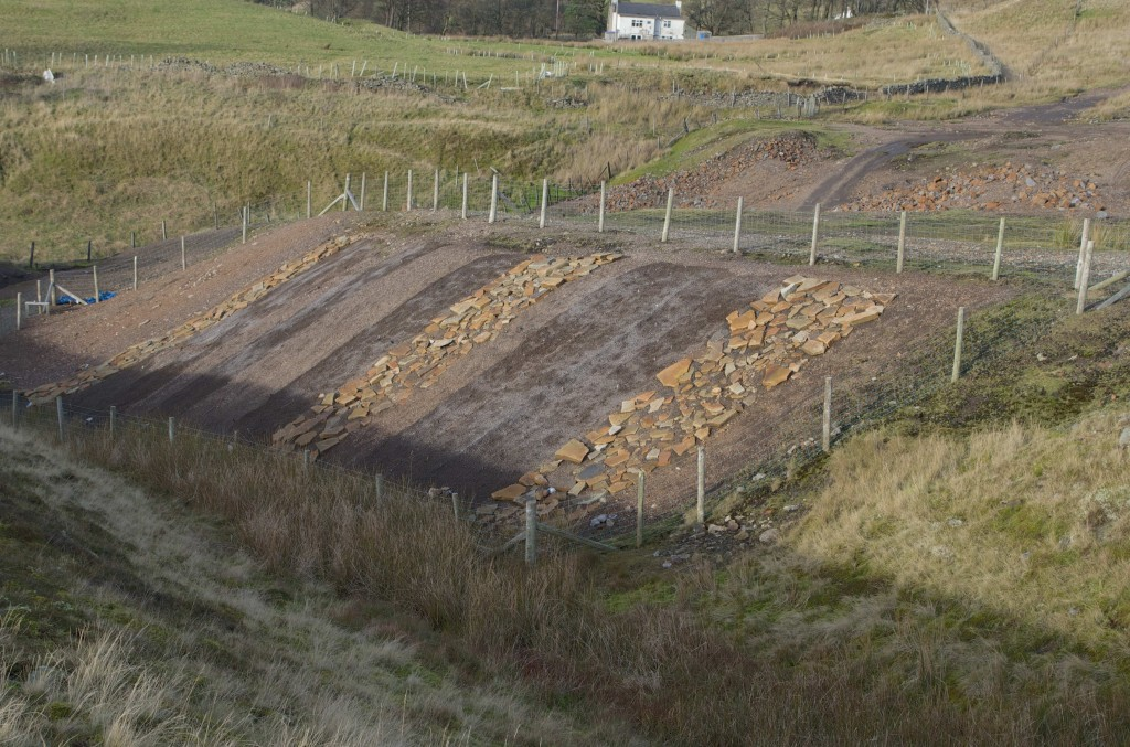 The experimental regeneration plot on Rampgill Burn dumps